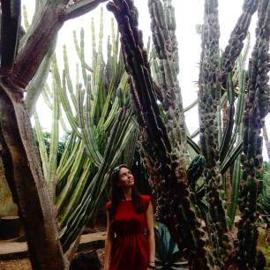 Madeira Botanic Gardens