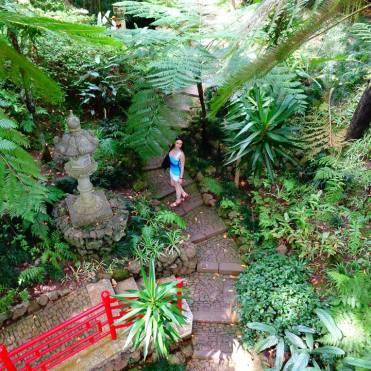 Monte gardens giant ferns